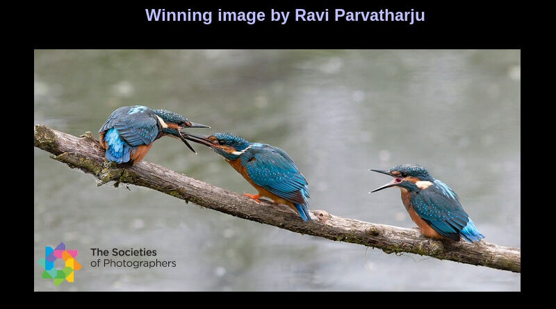 SINWP Bird Photographer of the Year 2020 in aid of RSPB – Winner Announced
