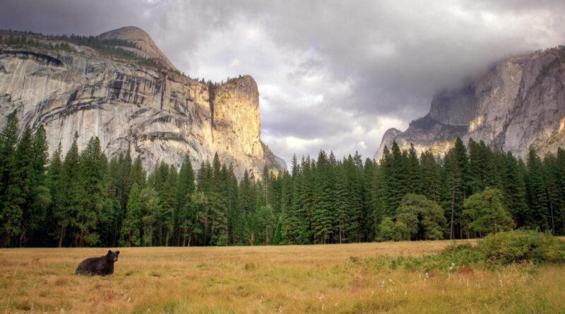 Plea Deal In Yosemite Murder