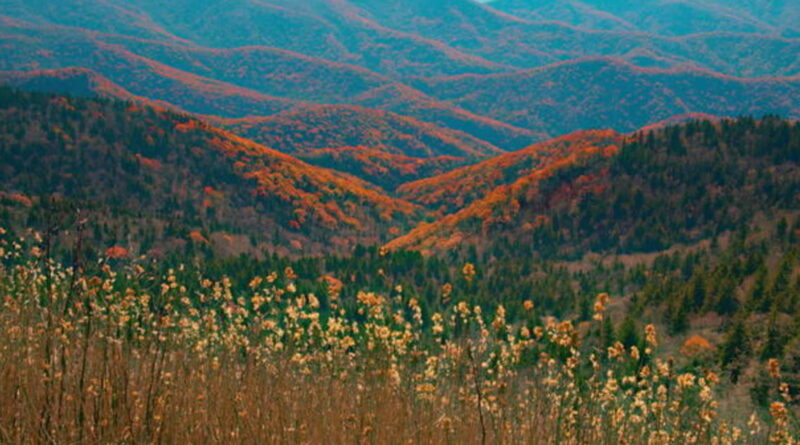 Nature: Late autumn colors