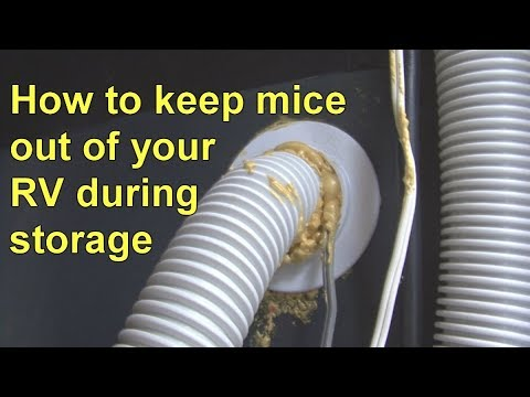 How To Keep Mice Out Of Your RV During Storage