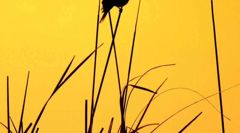 Photo Of The Day By Bernard Kaiser