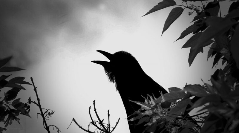 Spooky Shots Assignment Winner Rick Moore