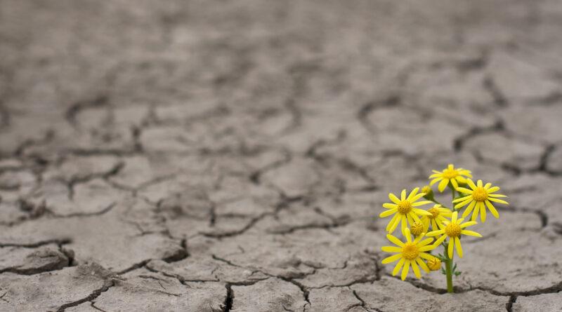 Choosing joy during difficult times – Harvard Health Blog