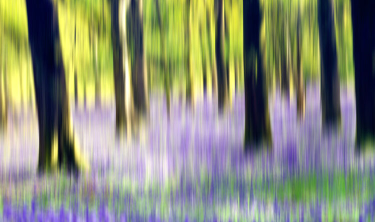 How to Take Creative Landscape Shots Using Intentional Camera Movement