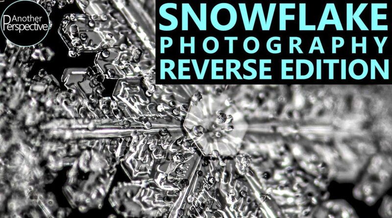 This timelapse makes snowflakes look as if they are forming right before your eyes