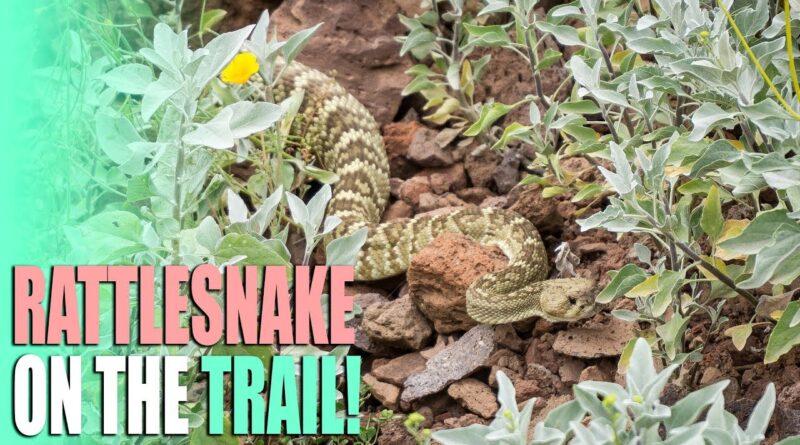 Repairs and Scares – Rattlesnake, Broken DJI Drone, Leaking RV Faucet