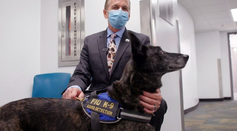 COVID-Detecting Dogs Pilot First Airport Program